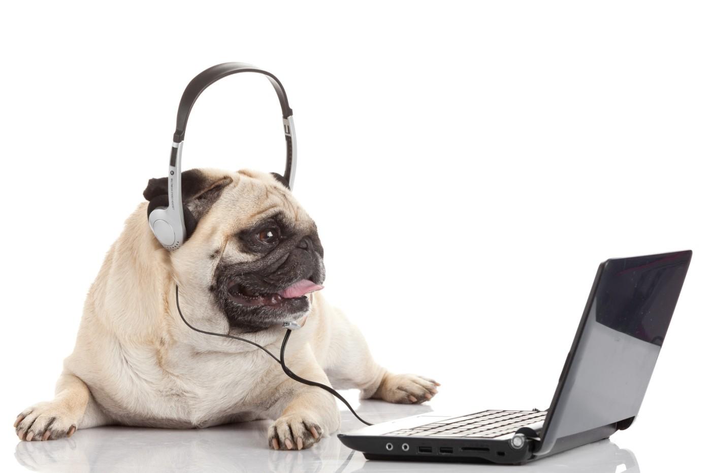 pug-fun-at-work