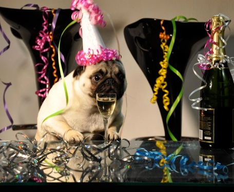 jenny20the20pug20new20years